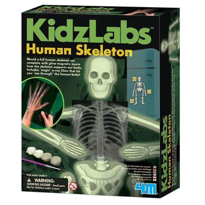 Образователен комплект Human Body 4M Човешки Скелет кутия