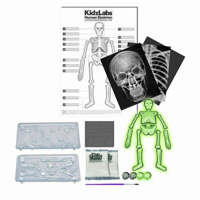 Образователен комплект Human Body 4M Човешки Скелет съдържание