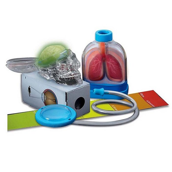 Образователен комплект Human Organs 4M Човешки органи